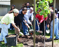 City mayors at tree planting